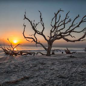 Driftwood Beach by George Holt - Landscapes Beaches ( driftwood, send, waves, seaweed, trees, ocean, sunrise, beach )
