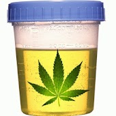 Marijuana/THC Test Calculator