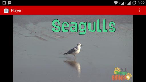 Animals TV Videos