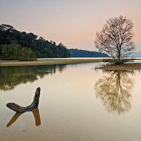 Mangrove by Mark Santos - Landscapes Waterscapes (  )