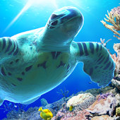 Sea Turtle LiveWallpaper