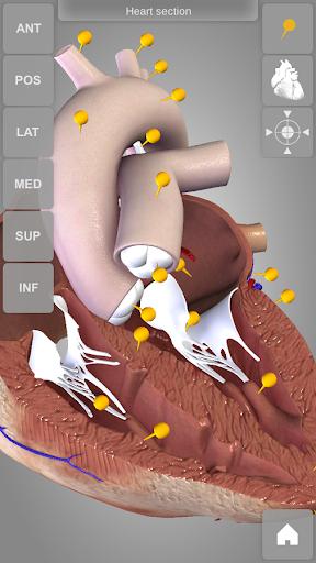 Heart 3D Anatomy Lite
