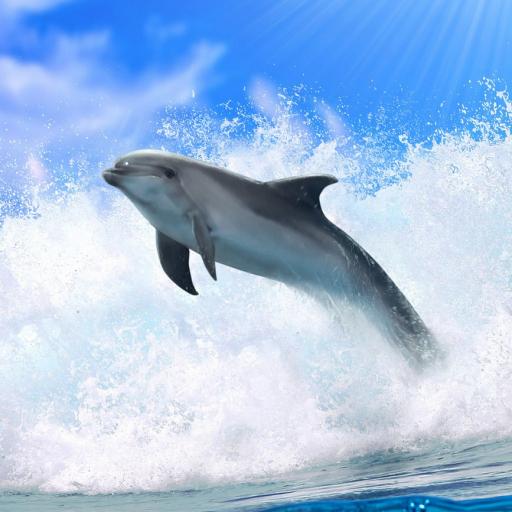イルカの3D。壁紙を生きる。 個人化 App LOGO-APP試玩