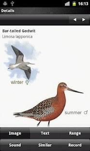 Birder- screenshot thumbnail