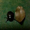 Giant Bug