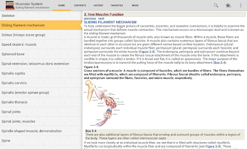 Muscular System Manual v4.3.104