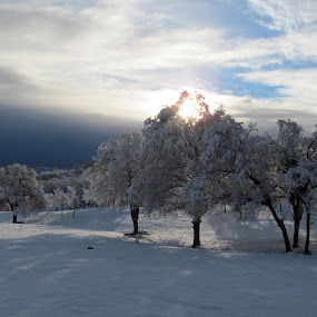 Winter morning freshness by Robin Nanni - Nature Up Close Trees & Bushes