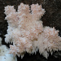 Coral Tooth