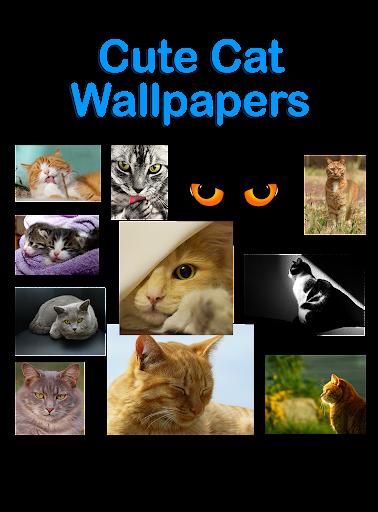 Cute Cat Free Wallpaper