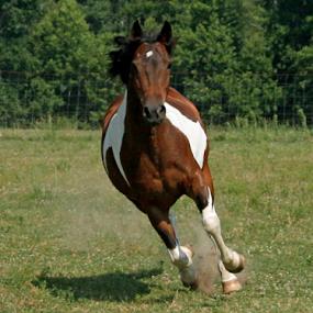 Pasture Fun by Karen Harrison - Animals Horses ( pasture, photograph, equine, horses, nature, horse, photo, running, photography,  )