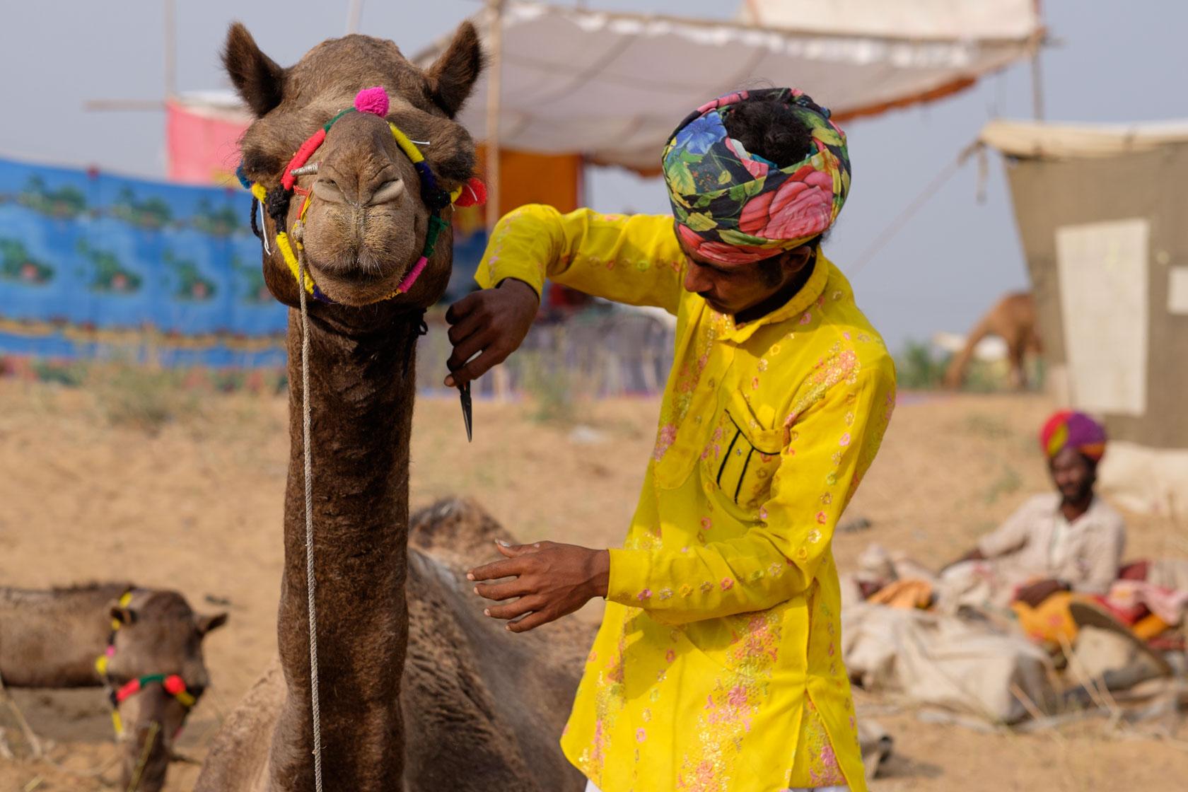 Camel Grooming, Rajasthan