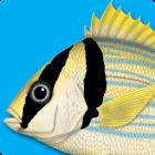 Peixes Marinhos - Guia de ID icon