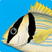 Marine Fishes - ID Guide