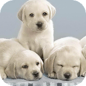 Amazing Puppies