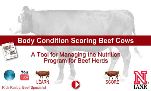 Body Condition Score Beef Cows
