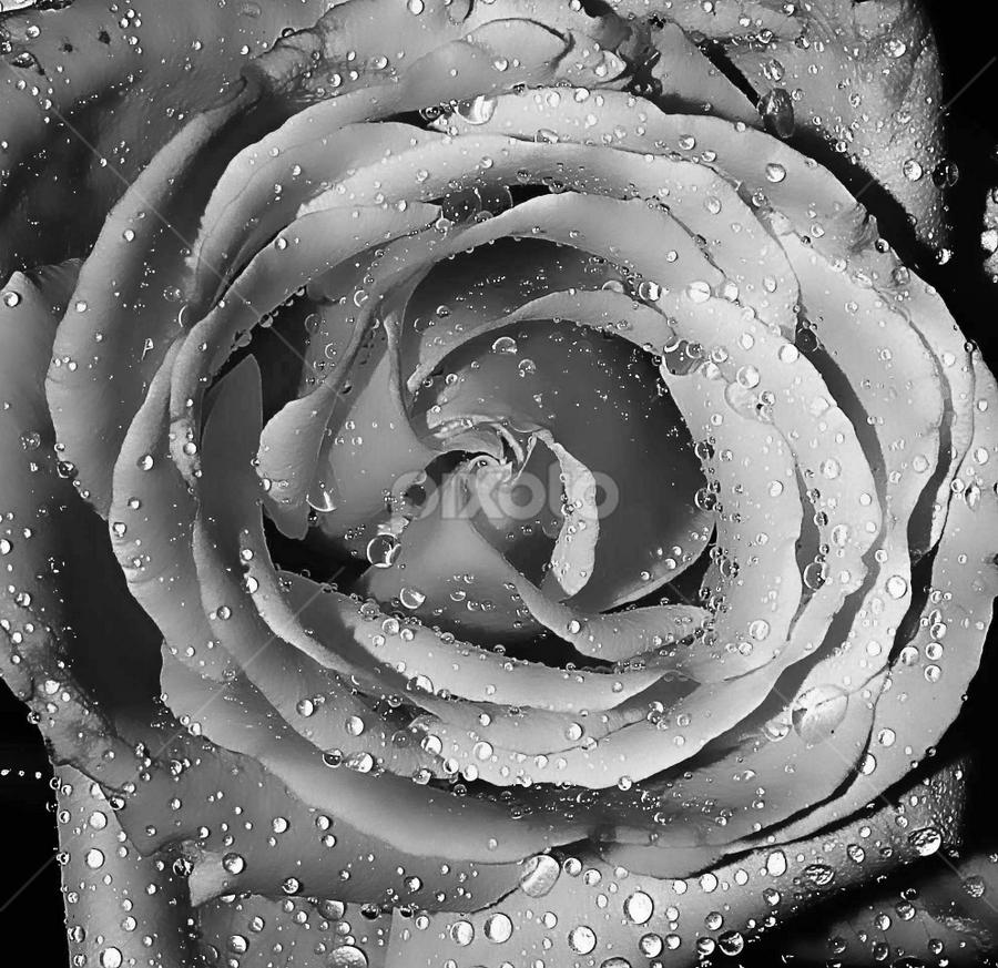 by JOEL Graphuchin - Black & White Flowers & Plants ( black & white, macro,  )