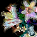 Flower and Butterfly Live Wall icon