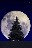 Screenshot of Winter Trees Free