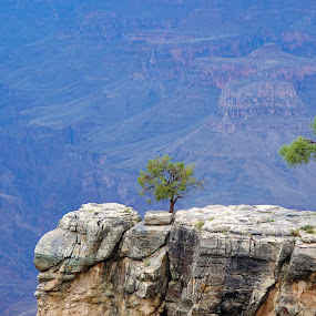 Grand Canyon by William Tipper - Landscapes Mountains & Hills