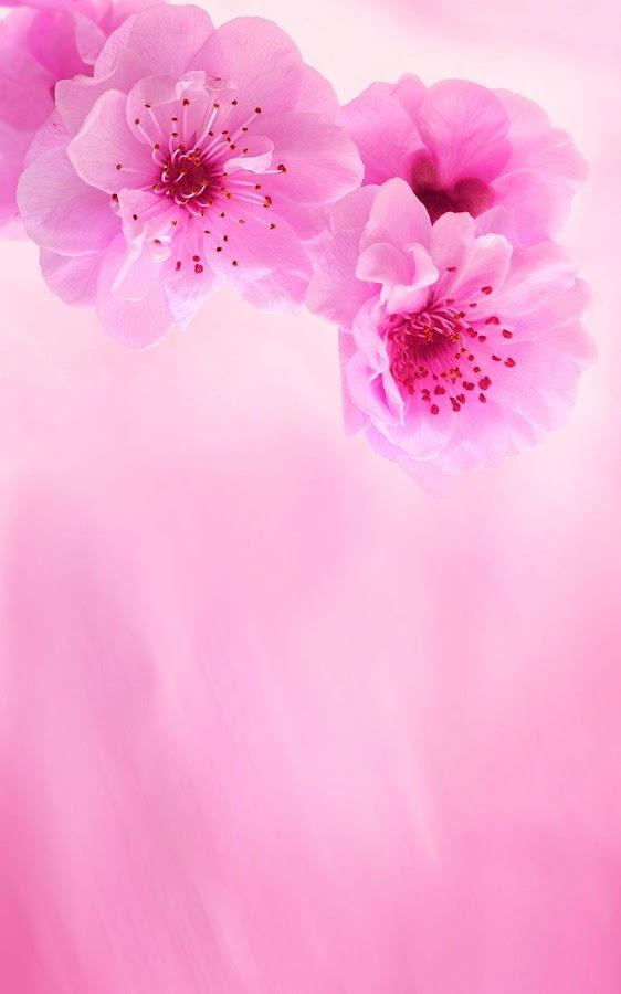 Pink Flowers Live Wallpaper Screenshot