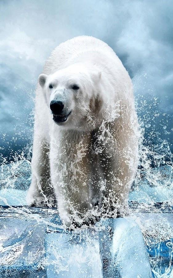 polar bear wallpaper android