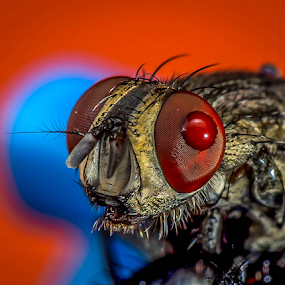 Fly # 15 by Dave Lerio - Animals Insects & Spiders