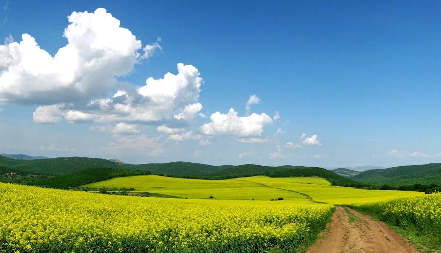Dobrogea by Leontina Deacu - Landscapes Mountains & Hills