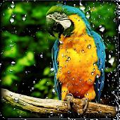 Parrot HD Wallpaper Live