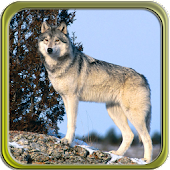 Puzzi puzzles wolves in HD