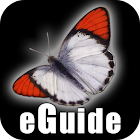 Butterfly eGuide icon