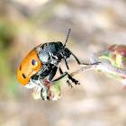 Escarabajo de las hojas