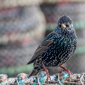 Who you looking at  by Mark Usher - Animals Birds ( bird, mudeford quay dorset, who you looking at )