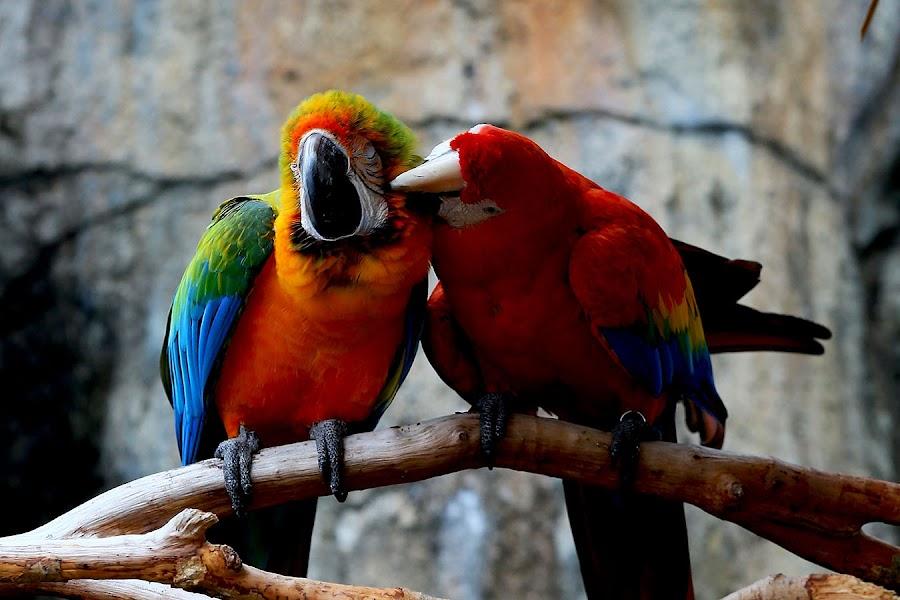 by Jeanny Widjaja - Animals Birds ( , color, colors, landscape, portrait, object, filter forge )