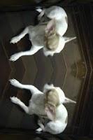 Screenshot of Mirror Camera