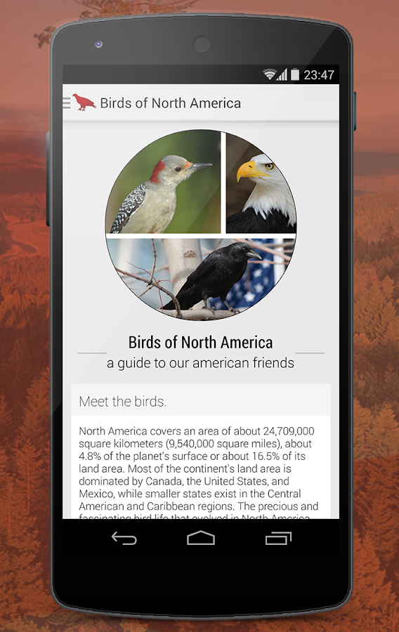 Birds of North America - screenshot