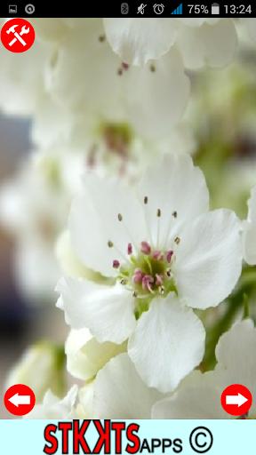 Fondos de flores movil