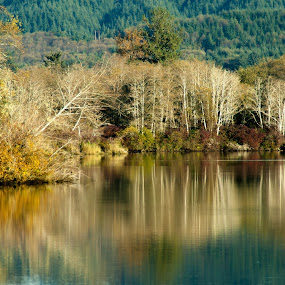 Fall colors by Cristian Bobocea - Landscapes Waterscapes ( pastel, reflection, autumn, colors, fall, lake )
