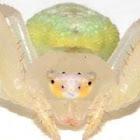 SpiderJoe