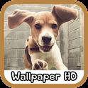 Beagle Wallpaper HD icon
