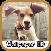 Beagle Wallpaper HD