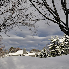 Snowed Under by Sue Green - Landscapes Weather ( winter, seasons, snow, white,  )