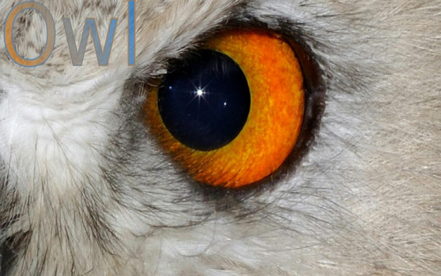 Animal Eyes FREE Android Apps On Google Play - 24 detailed close ups of animal eyes