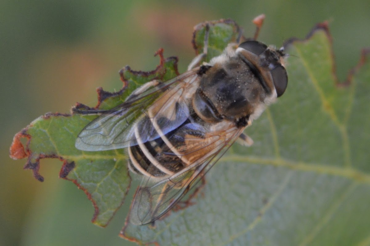 Small Drone-Fly