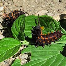 The Wildlife of Shasta County