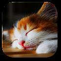 Sleep Cat Live Wallpaper icon