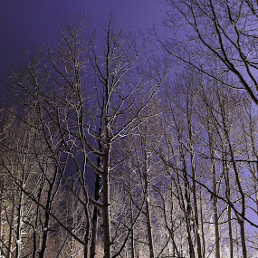 foggy nights by Axle Ethington - Landscapes Forests ( utah, fog, trees, pollution, salt lake city )