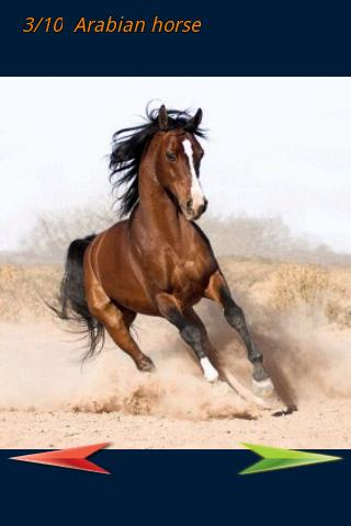 Amazing Horses Pictures - screenshot