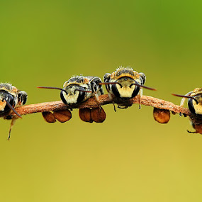Togetherness by Fadel Satriawan - Animals Insects & Spiders