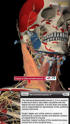 Download Muscle Trigger Point Anatomy APK | Free Downloads