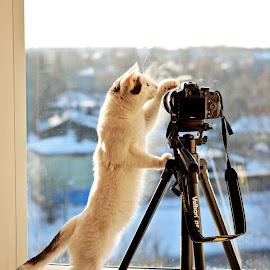 The Master by Nadezda Tarasova - Animals - Cats Playing ( cat, curious, camera, tripod, professional )
